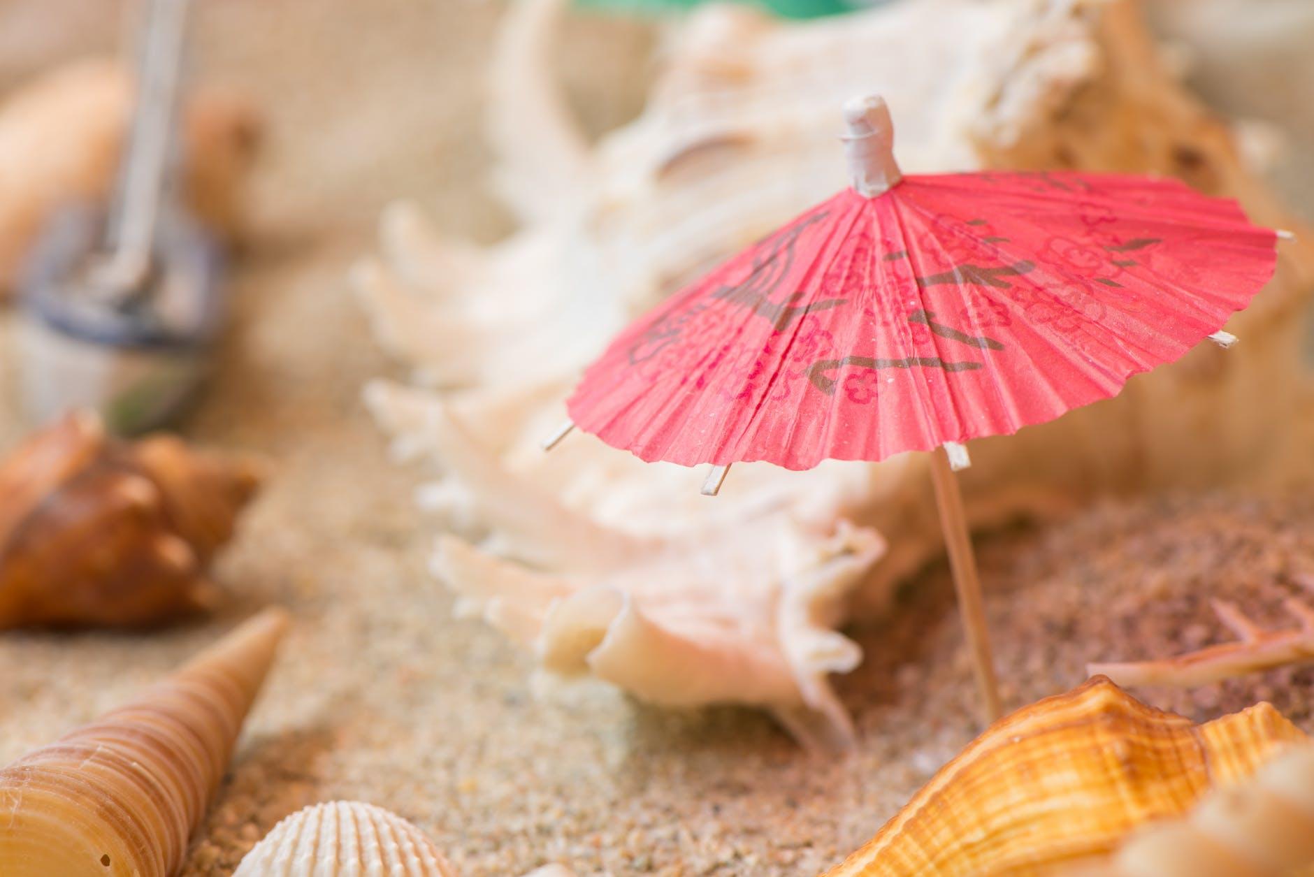 conch decoration sand seashell